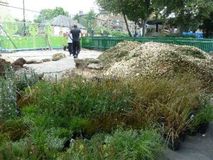 Herbs and grasses arrive in the infants' playground for planting out tomorrow.