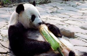 Roll up to buy your homemade ice lollies after school on Friday (ours come without the bear).