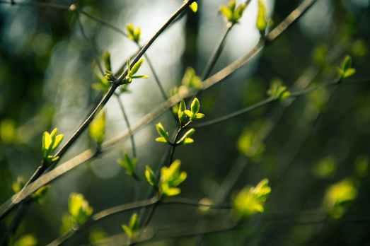 spring-leaves.jpg